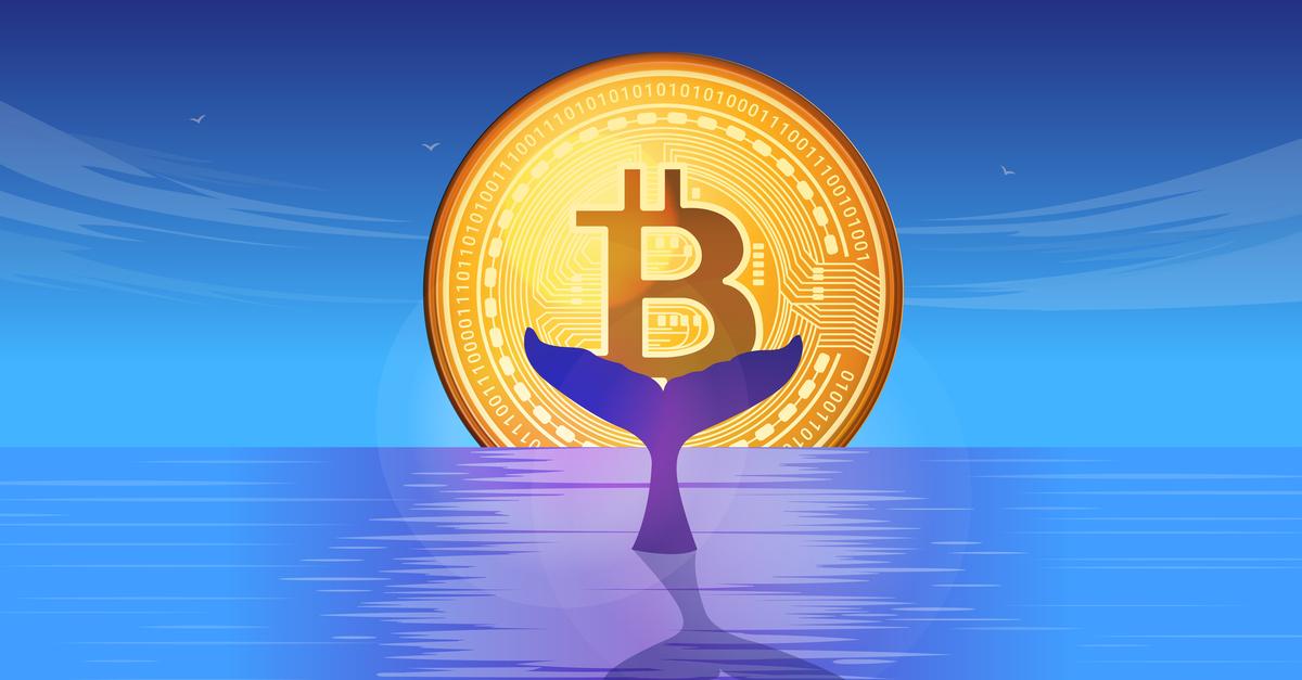 How do Investors thread Volatility Splashes? – Blockchain News, Opinion, TV and Jobs