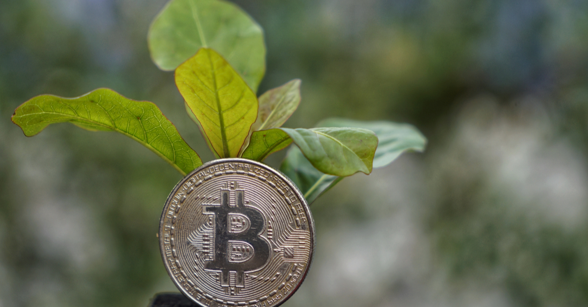 The Eco-Friendly Blockchain Project With a Mission to Plant 10 Million Trees – Blockchain News, Opinion, TV and Jobs